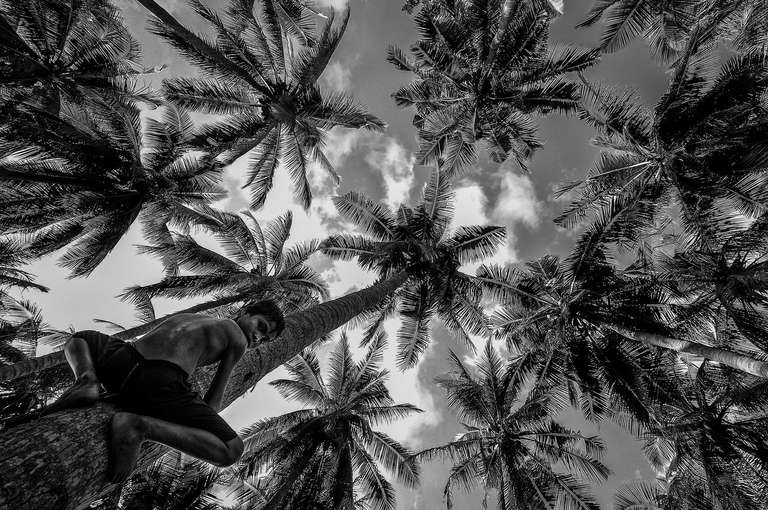 Climb Coconut